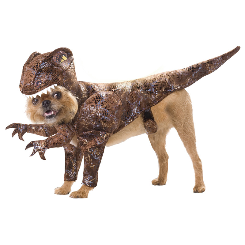 Pet-Raptor-Halloween-Funny-Costume-Halloween-costume-ideas-Halloween-costumes-Halloween-ideas