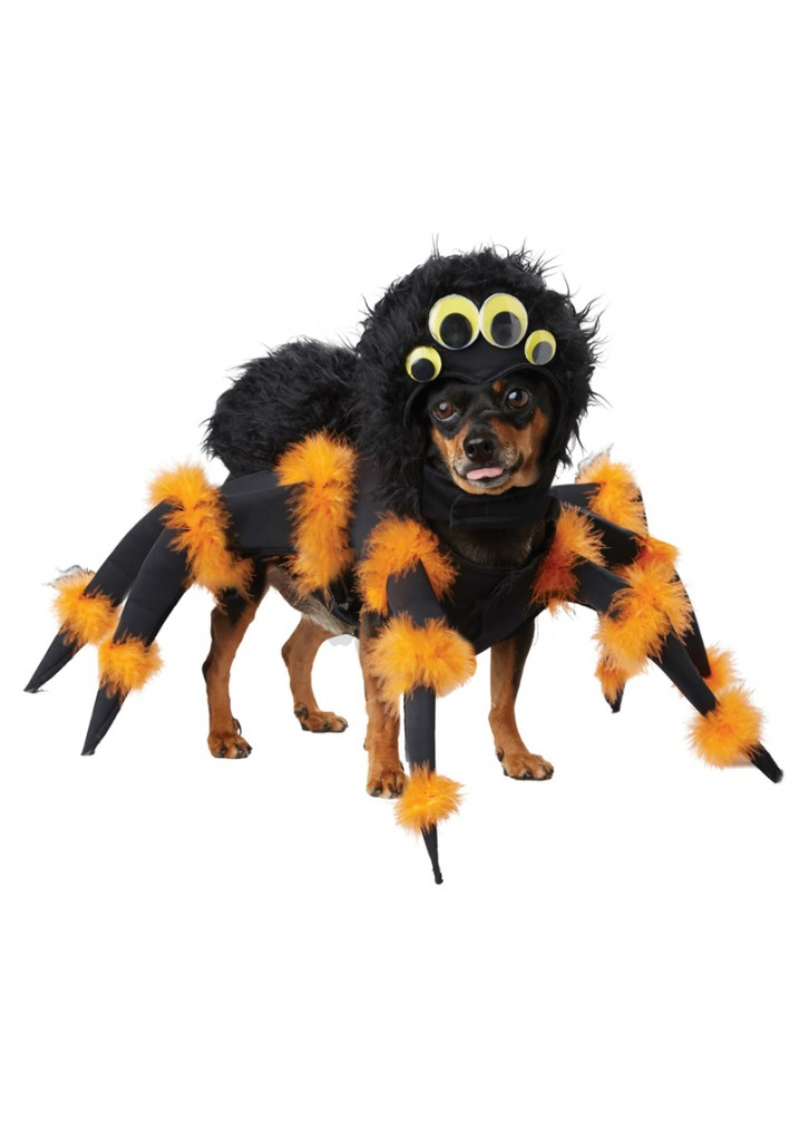 Spider-Dog-Halloween-Costume-Halloween-costume-ideas-Halloween-costumes-Halloween-ideas