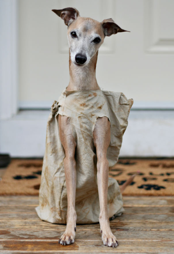 diy-pet-costume-for-halloween-Halloween-costume-ideas-Halloween-costumes-Halloween-ideas-Ghost-Dog-Scarey-Dog