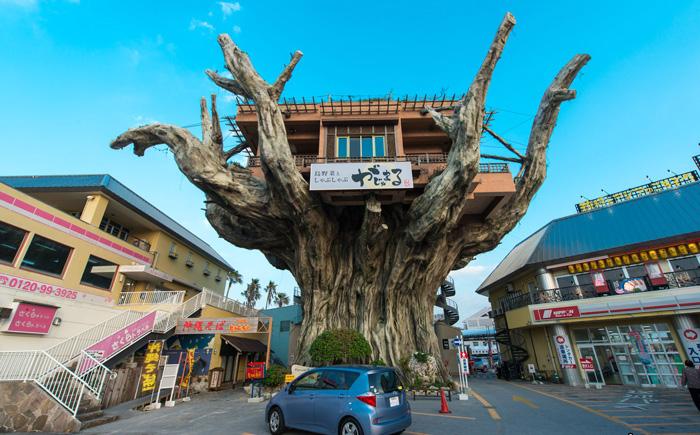 Tree-House-Naha-solo-travel-companies-places-to-travel-alone-solo-female-travel-solo-travel-destinations2