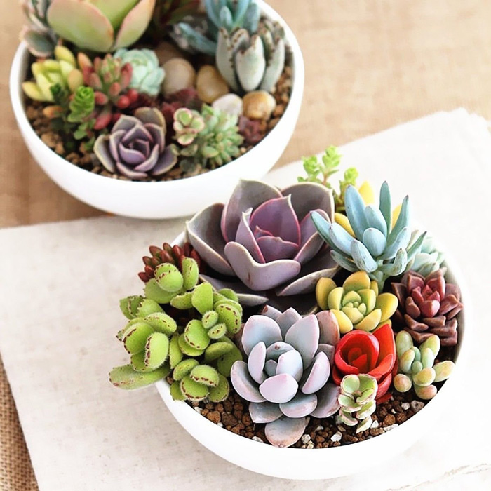 Natural-Home-with-Succulents-Natural-decor-Cozy-Home-Plants-Indoor-home-decor-items-natural-décor-living-room-decor-home-accents-home-decor-accessories