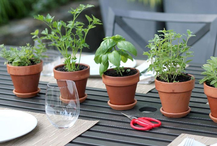 Herbal-pots-centerpiece-outside-party-ideas-simple-table-centerpiese-ideas-table-plants-small-plants
