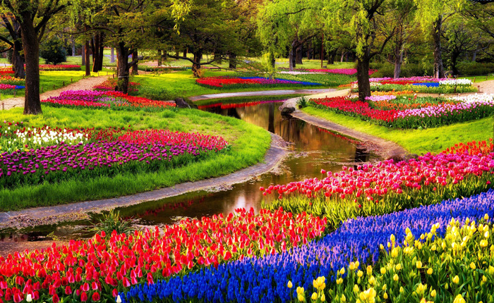 Keukenhof-gardens-tree-spring-break-vacation-deals-spring-break-family-vacations-spring-travel-spring-break-trips