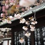 Chasing Spring Around the Globe