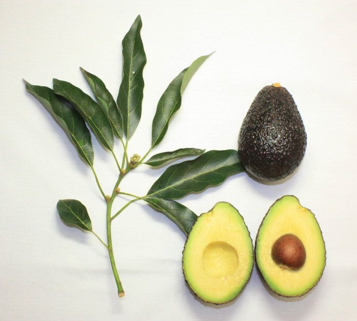 organic-skin-care-avocado-for-skin-care