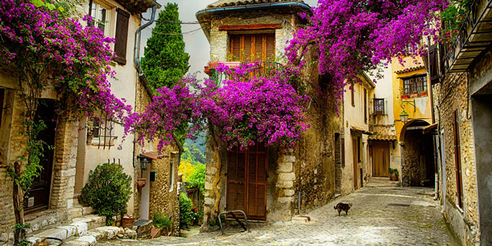 provence-France--spring-break-trip-ideas-cherry-blossom-tree-spring-break-vacation-deals-spring-break-family-vacations-spring-travel-spring-break-trips
