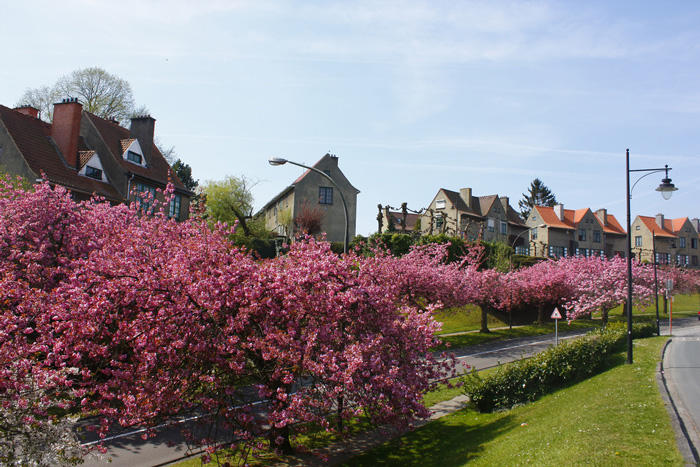 spring-break-trips-in-belgium-blossom-tree-spring-break-vacation-deals-spring-break-family-vacations-spring-travel-spring-break-trips