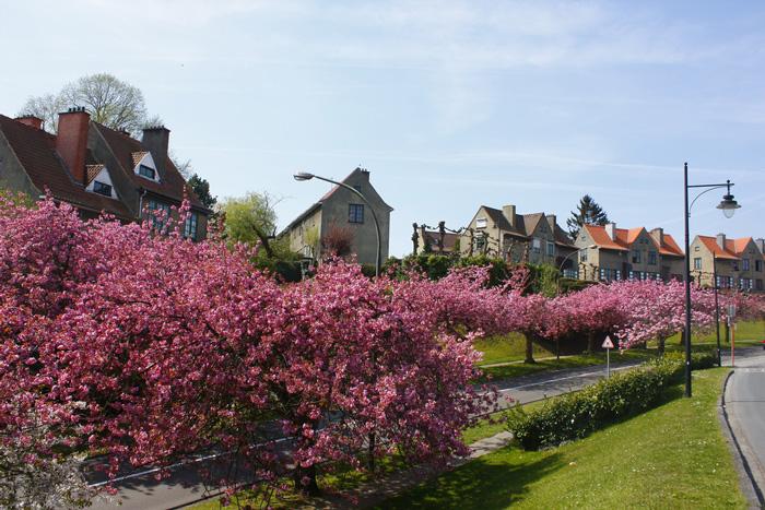 spring-break-trips-in-belgium-blossom-tree-spring-break-vacation-deals-spring-break-family-vacations-spring-travel-spring-break-trips