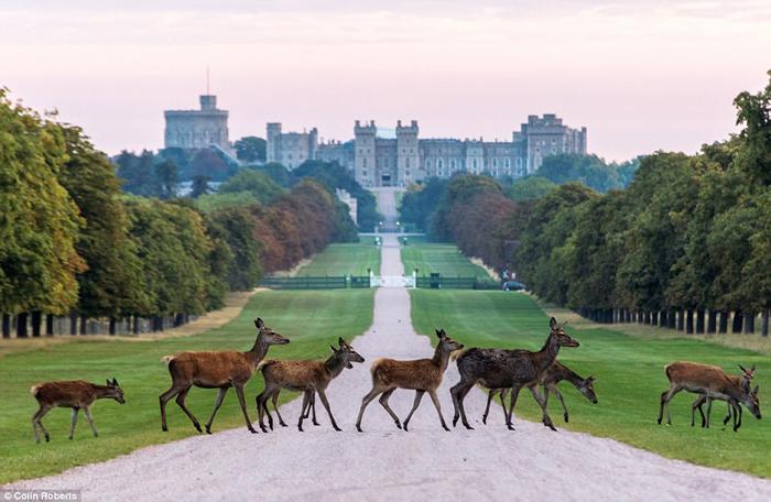 windsor-castle-tour-medieval-times-castles