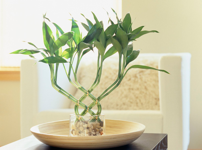 Feng-Shui-Bamboo-Plants-for-Living-Room