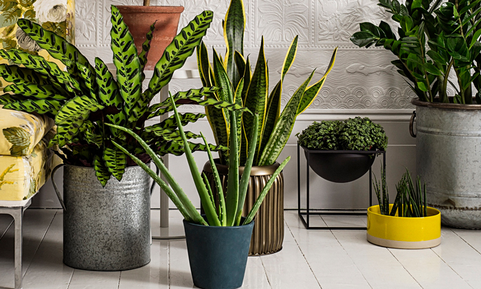 feng-shui-tips-for-home-interior-plants