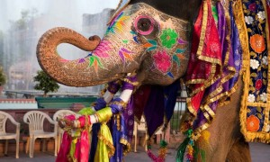 india-easter-celebrations-easter-traditions