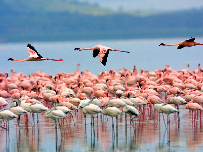 Lake-Nakuru-National-Park-africa-tourism