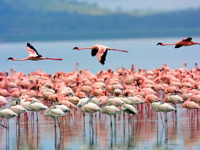 Lake-Nakuru-National-Park-africa-tourism