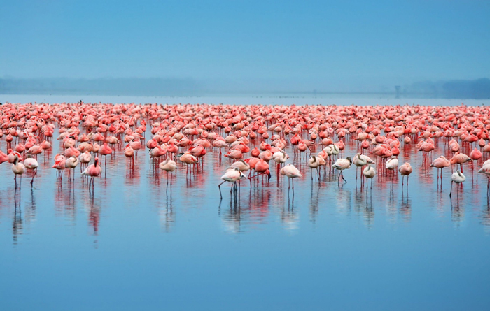 best-places-to-visit-in-africa-flamingos