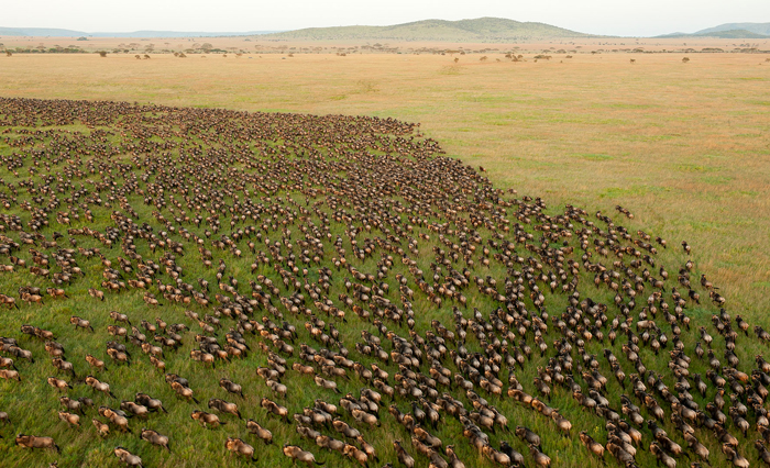 the-great-migration-in-africa