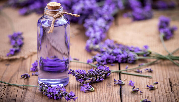 Essential-Oil-Lavander-for-Portable-Aromatheraly