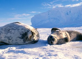 Antarctica – The Land of Neverending Ice
