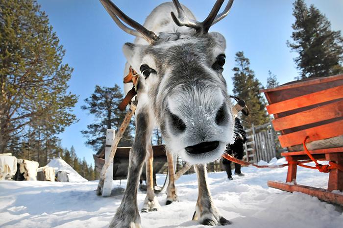 Santa-Claus-Rain-Deer