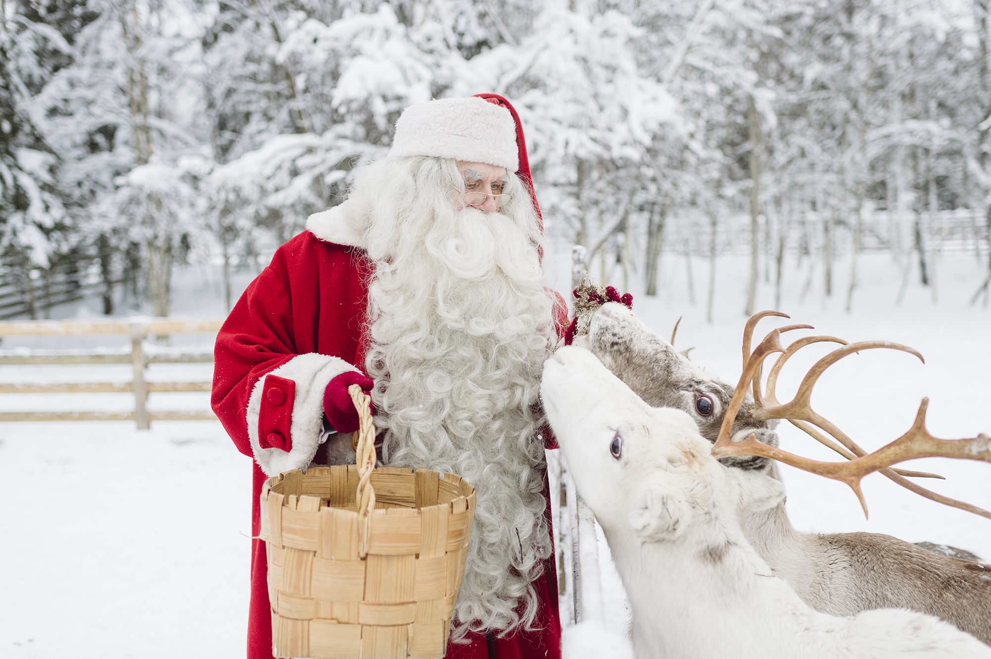 Santa Claus Feeding His Deer
