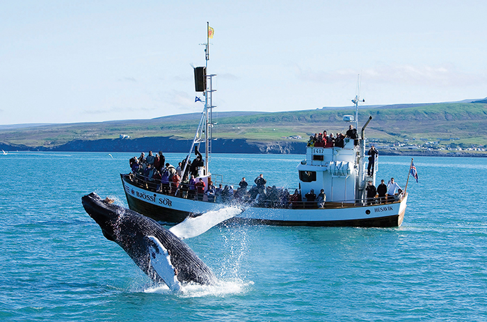 Whale-Watching-in-Iceland