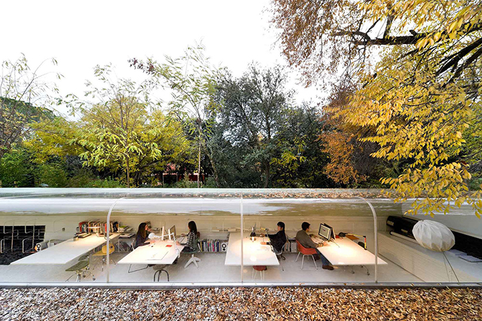 Selgas Cono office in the woods
