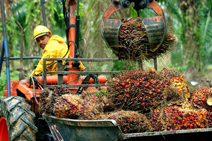 Transporting Palm Oil