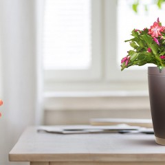 Intelligent Plant Pot – Parrot Pot