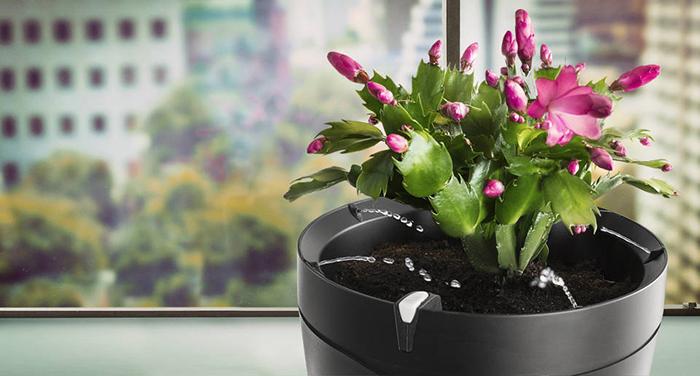 Parrot-Pot-Smart-Flower-Pot