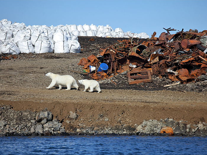 Polar bear and her baby searching for food