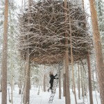 Back to Nature – Beautiful Tree Houses