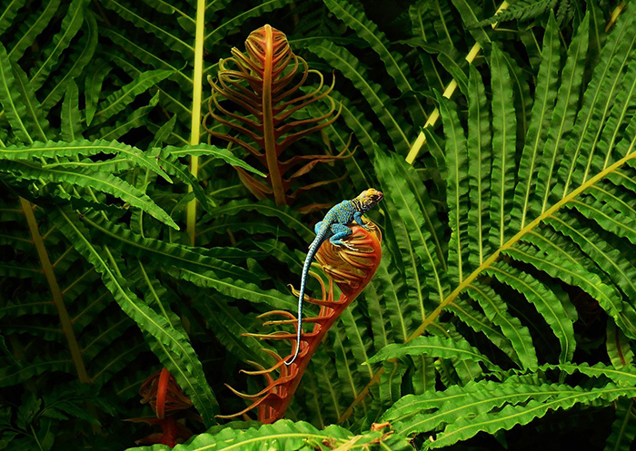 Colorful lizard on a plant