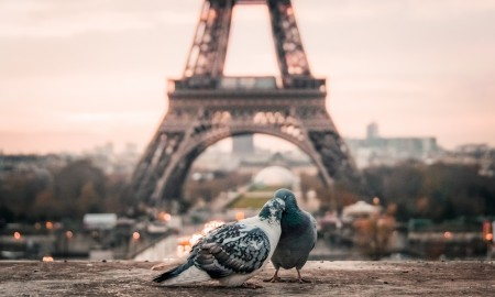 Love Birds in Paris