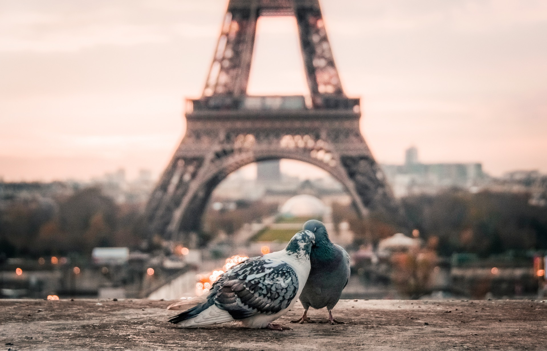 Love Birds in Paris