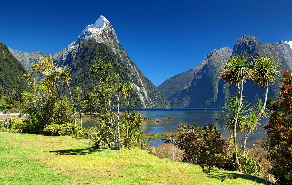 Outdoors scenery in New Zealand