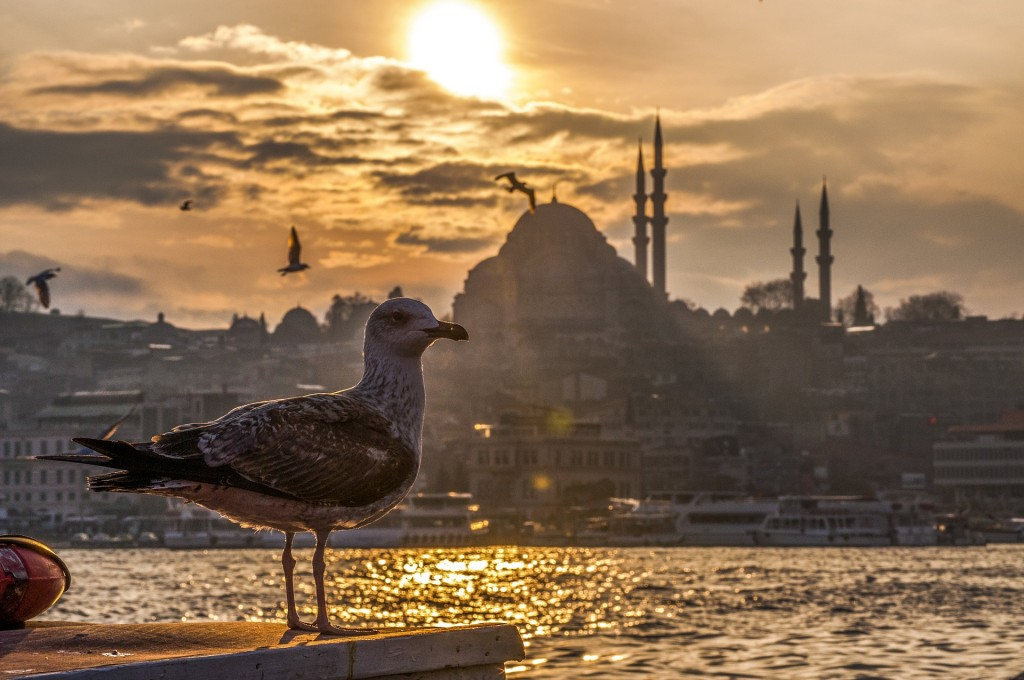 Seagull in Istanbul
