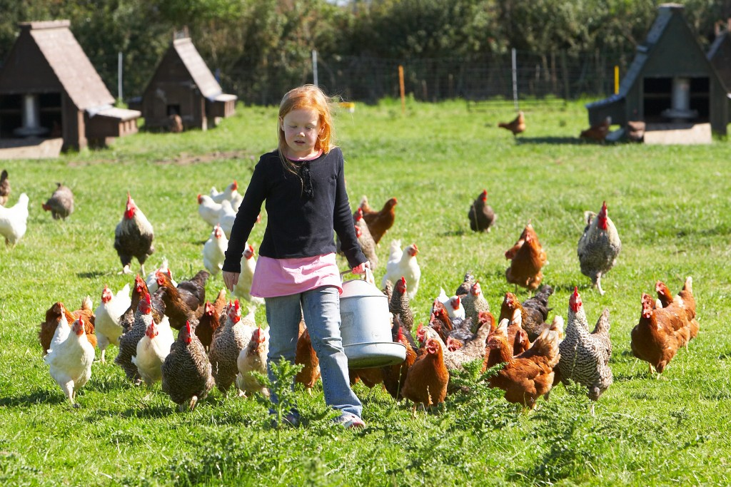 Girl on a farm with chicken around