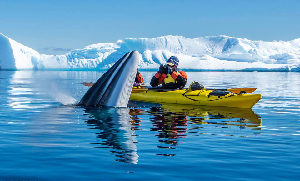 Man kayaker picturing a whale from water