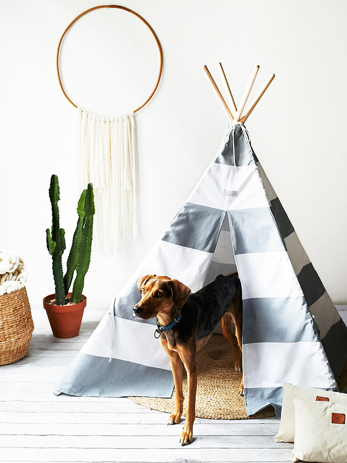 Dog staning in a luxury large tepee pet house