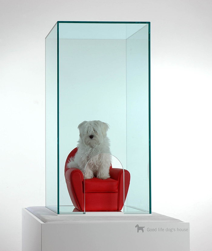 Glass pet house with a armchair and a dog