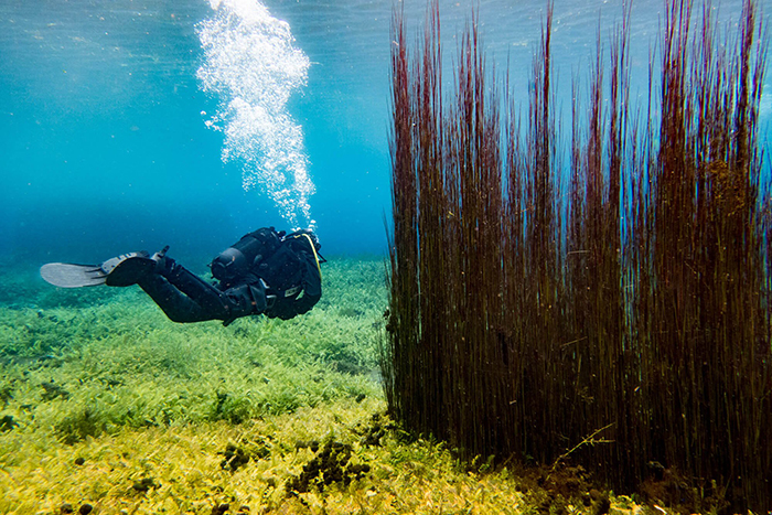 Diver sscuba diving in Capo D'Acqua Italy