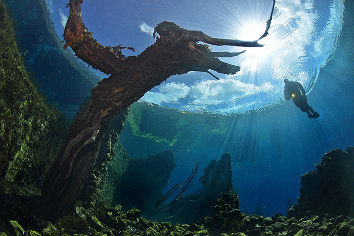 Large Tree underwater in Capo D'Acqua Lake next to a diver
