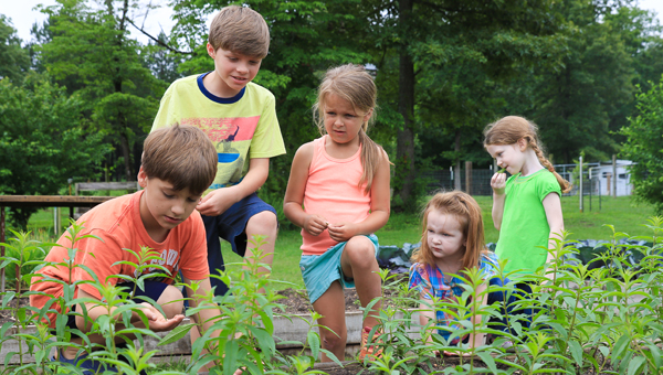 Kids gardening and exploring the plants