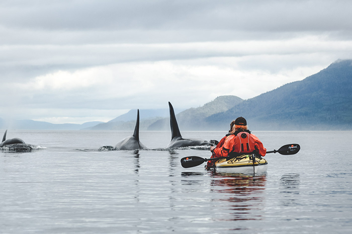 Man Kayaking in Vancouver Island with whales above water