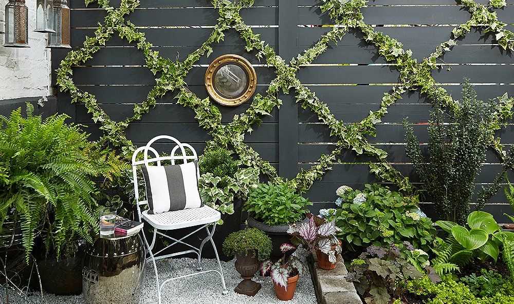 Trees growing on a wooden wall with other plants around and a chair in front