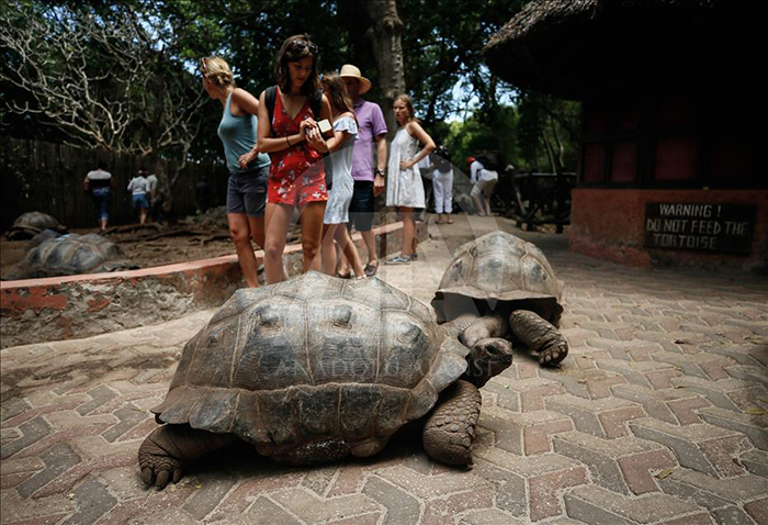 Giant turtle and tourists taking picture of it