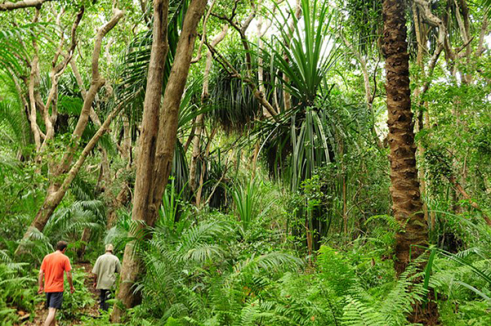 People exploring the most famous National Park in Zanzibar