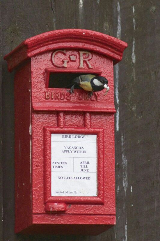 Postbox as a birdhouse and a sweet bird coming out of it