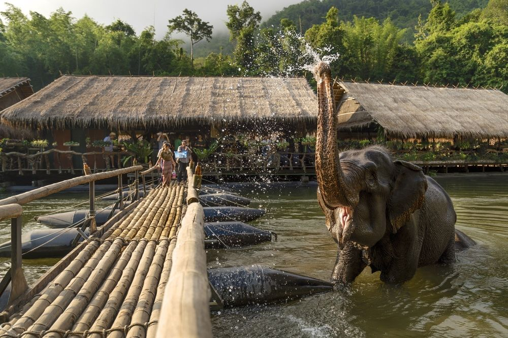 Elephant in River Kwai Jungle Rafts Hotel