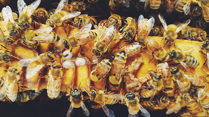 Many bees at one place